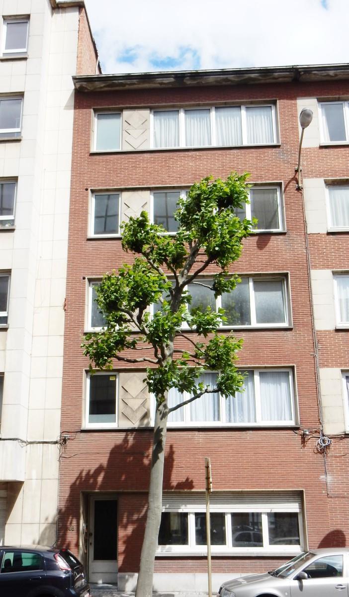 Appartement - Schaarbeek - #3798187-9